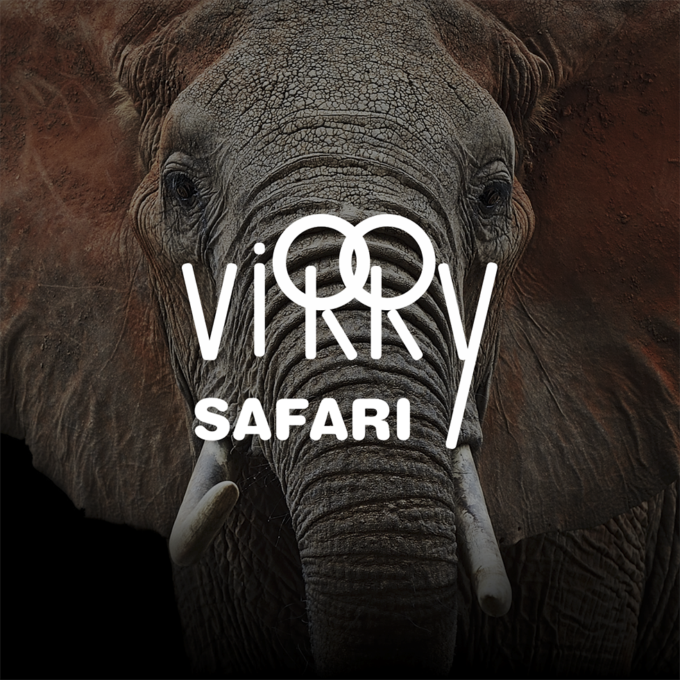 Virry VR Animals: Wild Encounters